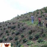 چطور قهوه تخصصی در هندوراس به نقطه اوج رسید
